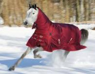 Shires Winter Horse Blankets